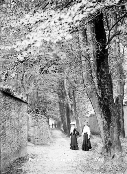 Tree lined lane with two ladies in typical attire of the early 1900s. Photographer: Arthur Philp