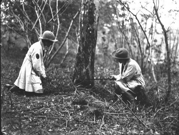 Two members of the Women's Land Army kneeling in a wooded area in Cornwall preparing to fell a tree with a cross-cut saw. The women's uniform consists of boots, gaiters, felt hats and pale fabric overalls. Photographer: Arthur William Jordan