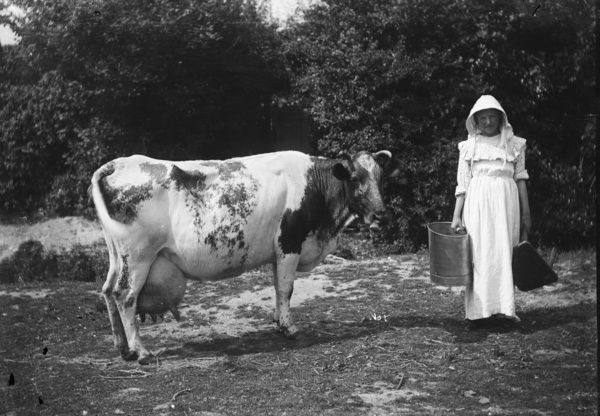 Woman about to milk a cow. Photographer: Samuel John Govier