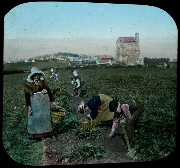 A group of men and women picking potatoes in a field by an engine house. There is no associated mining gear such as head gear or stamps. Photographer: Unknown