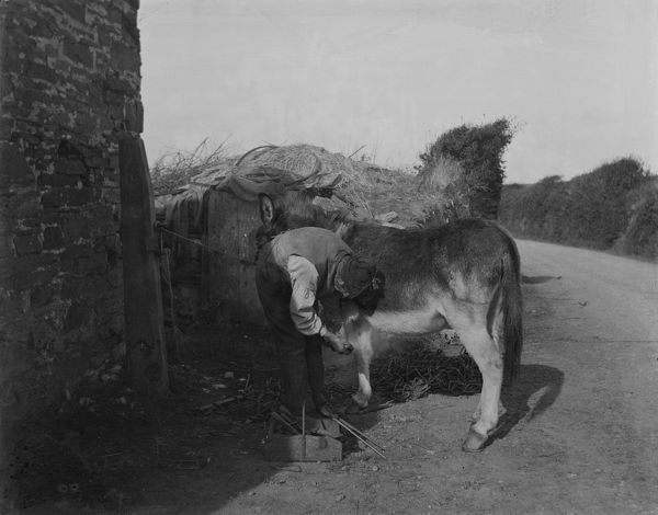 A man fits or repairs a shoe on the front hoof of a horse. Photographer: T.H. Williams