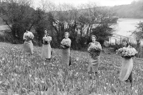 Five women picking daffodils, standing with bunches. Probably on the River Fal, with a laid-up ship on the water in the background. Photographer: Unknown