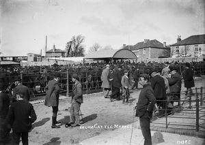 Cattle Market, Truro, Cornwall. About 1910