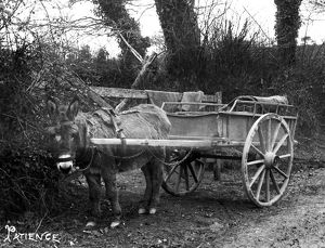 A Donkey Cart, Cornwall. Around 1900