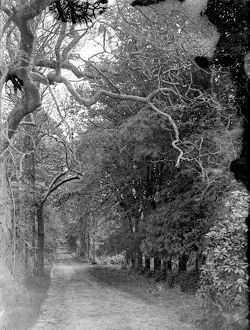 Fox's Lane or Captains Walk, Falmouth, Cornwall. Early 1900s