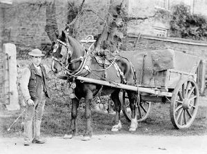 A horse and cart in Truro, Cornwall. Early 1900s