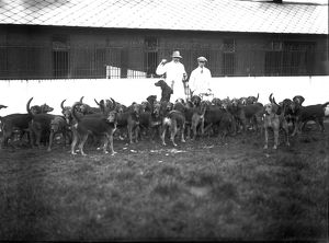 Hounds, Scorrier House, Gwennap, Cornwall. Early 1900s