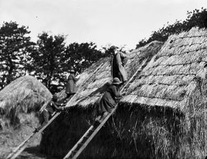 Members of the First World War Women's Land Army thatching a hay rick. Tregavethan Farm