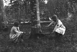Members of the First World War Women's Land Army engaged in tree felling in Cornwall