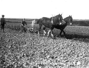 Ploughing with a team of two horses, Cornwall. Early 1900s