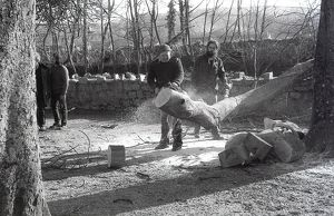 Tree felling, Lostwithiel, Cornwall. March 1983