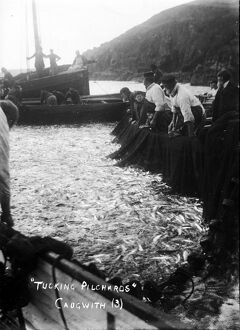Tucking pilchards at Cadgwith, Cornwall. Late 1800s