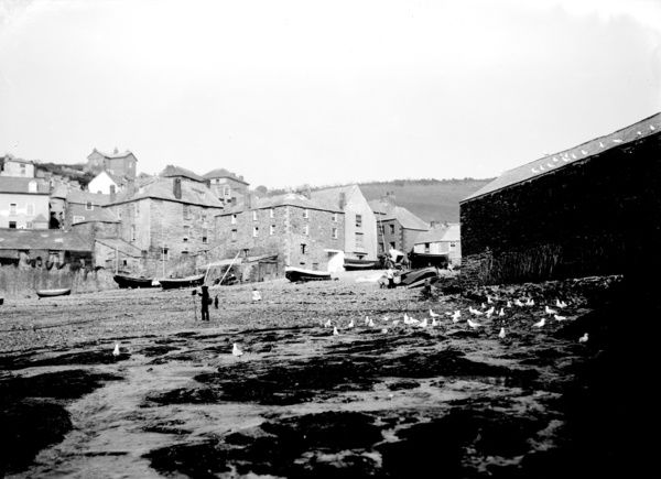 Gulls on beach with a photographer with camera and tripod in action. Boats and houses behind. Photographer: Herbert Hughes