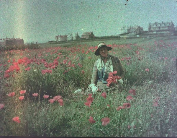 Lady sitting in a poppy field behind Fistral Beach Newquay, Pentire, Cornwall. Around 1925