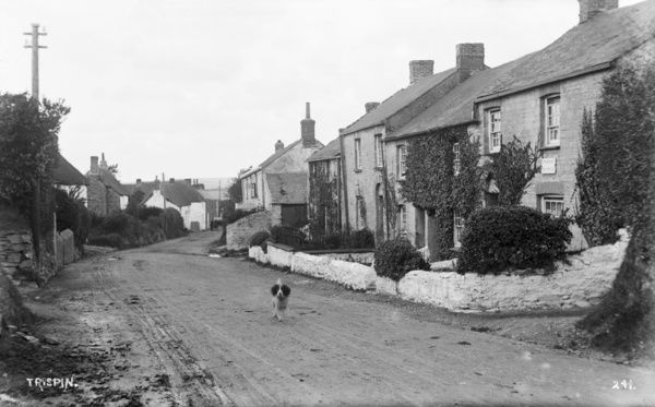Trispen street scene, with dog. Photographer: Arthur William Jordan