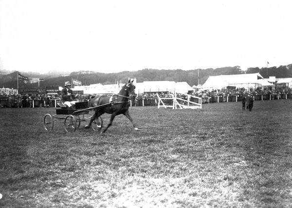 Trotting event, Royal Cornwall Show, Camborne, Cornwall. 1923 or 1927