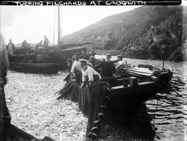 Cadgwith harbour with fishermen, fishing boats and a tucking net full of pilchards. Photographer: Unknown