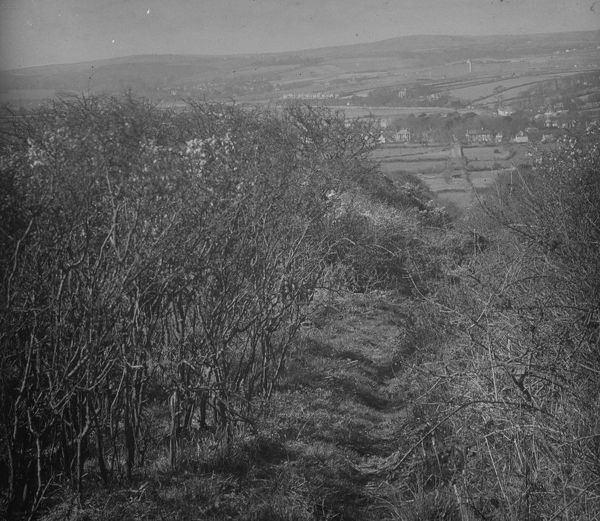 A long view looking down the long abandoned and overgrown Angarrack incline towards the village