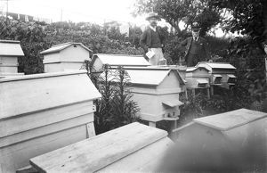 Beehives and beekeepers, unidentified location, Cornwall. Early 1900s