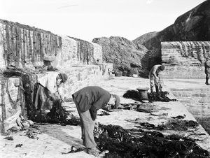 Fishermen attending to nets in Gorran Haven harbour, Cornwall. 7th June 1909