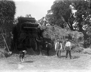 Haymaking, Cornwall. 1900s