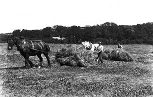 Haymaking, Cornwall. May-June 1916