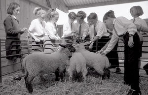 Livestock Unit, Fowey Community School, Fowey, Cornwall. July 1990
