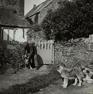 Man with dogs, Tolverne Barton, Philleigh, Cornwall. Around 1925