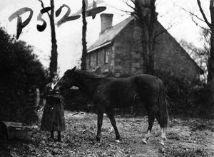 Member of the First World War Women's Land Army with a horse, Tregavethan Farm, Truro, Cornwall