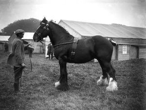 Royal Cornwall Show, Camborne, Cornwall. 13th-14th June 1923