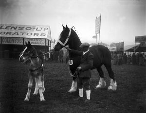 The Royal Cornwall Show, Camborne, Cornwall. 13th-14th June 1923